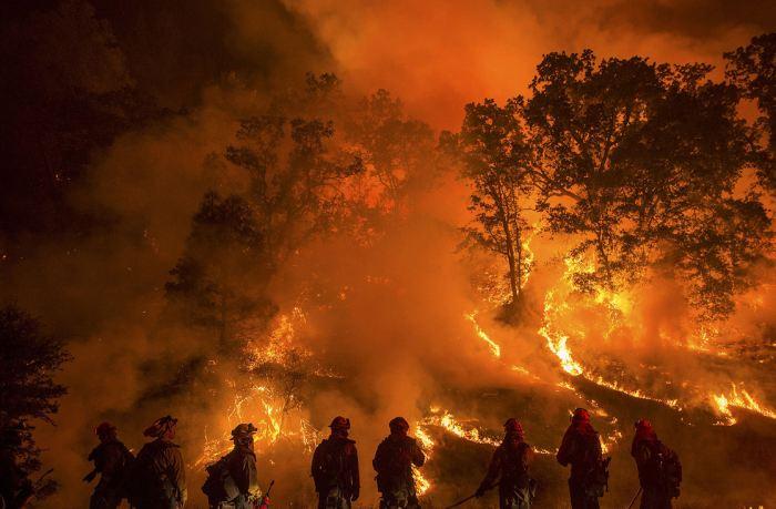 Wildfire Binge &Purge