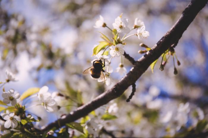 Pollen – Sophistries